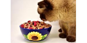 compléments alimentaires chats