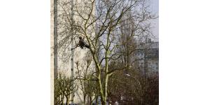 elagage arbre hiver