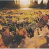 Préparez votre jardin pour l'hiver - Kelinfo