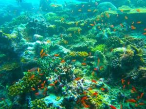 Plongée aux Maldives - Kelinfo