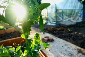 domotique s'invite dans votre jardin